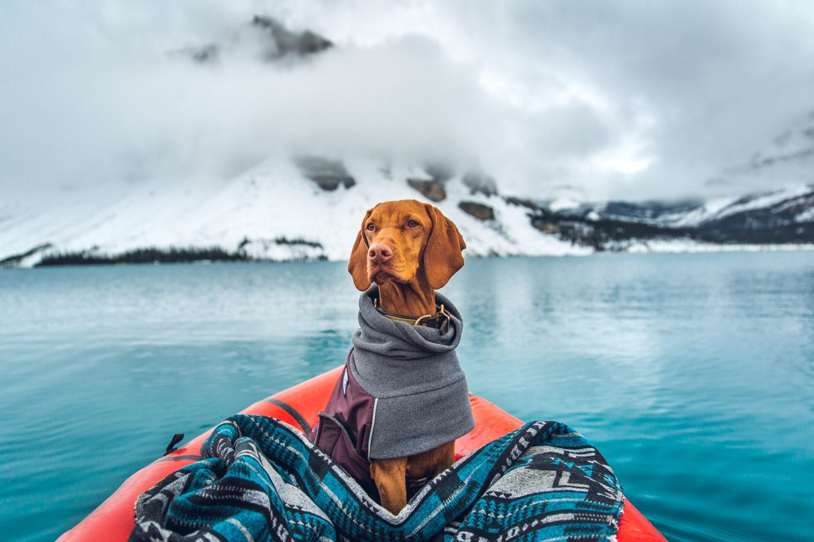 Whiskey the Vizsla wrapped up in a blanket on Bow Lake on a cloudy evening in Banff National Park, Canada