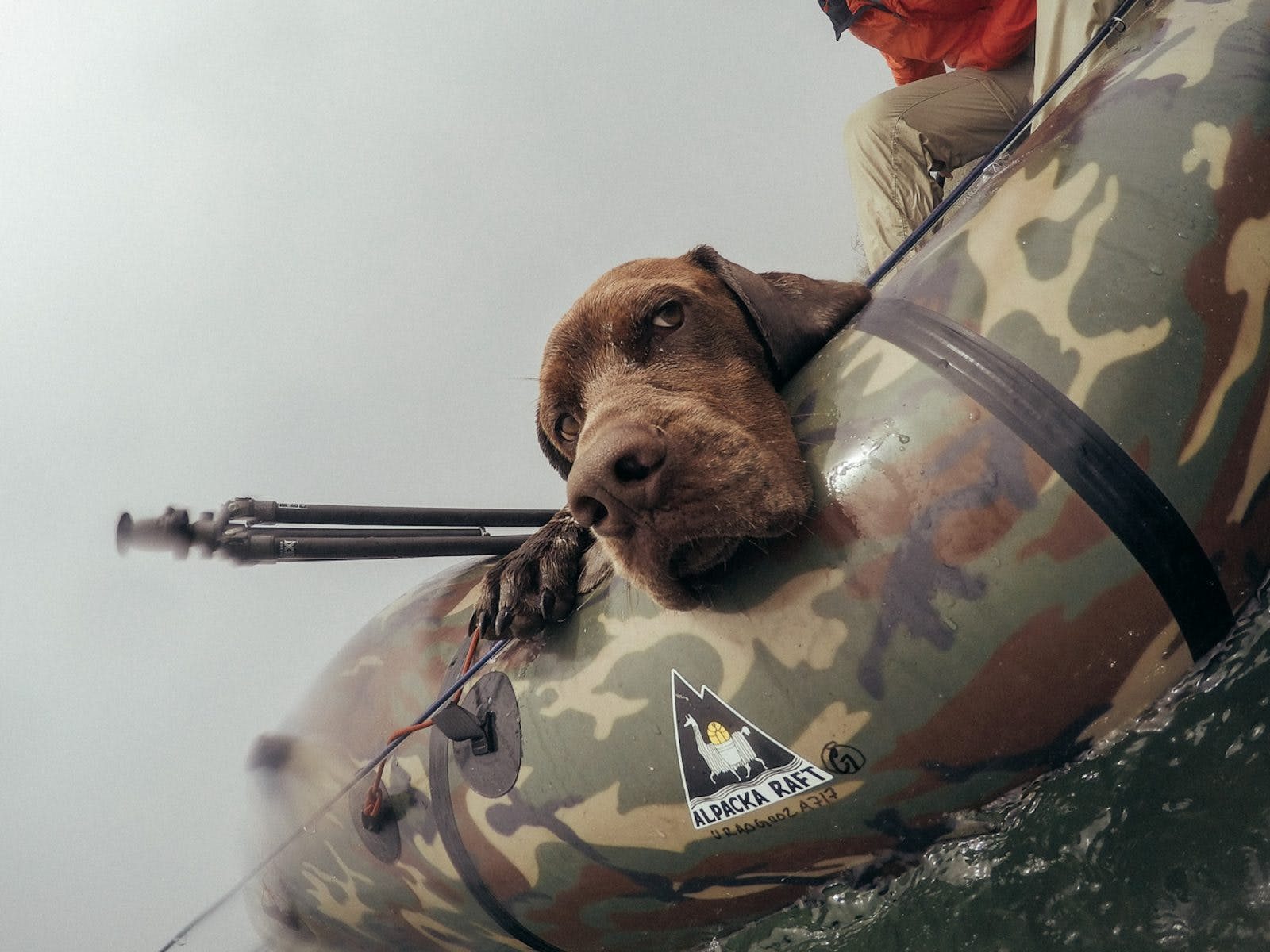 Poor Argo is so sad he doesn't have a dog PFD! Photo by Paolo Marchesi.