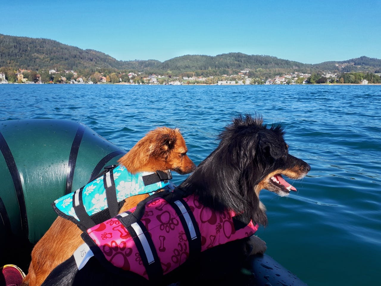 """""""Two small adventure dogs: Still have to get used to the wobbly """"ground"""""""