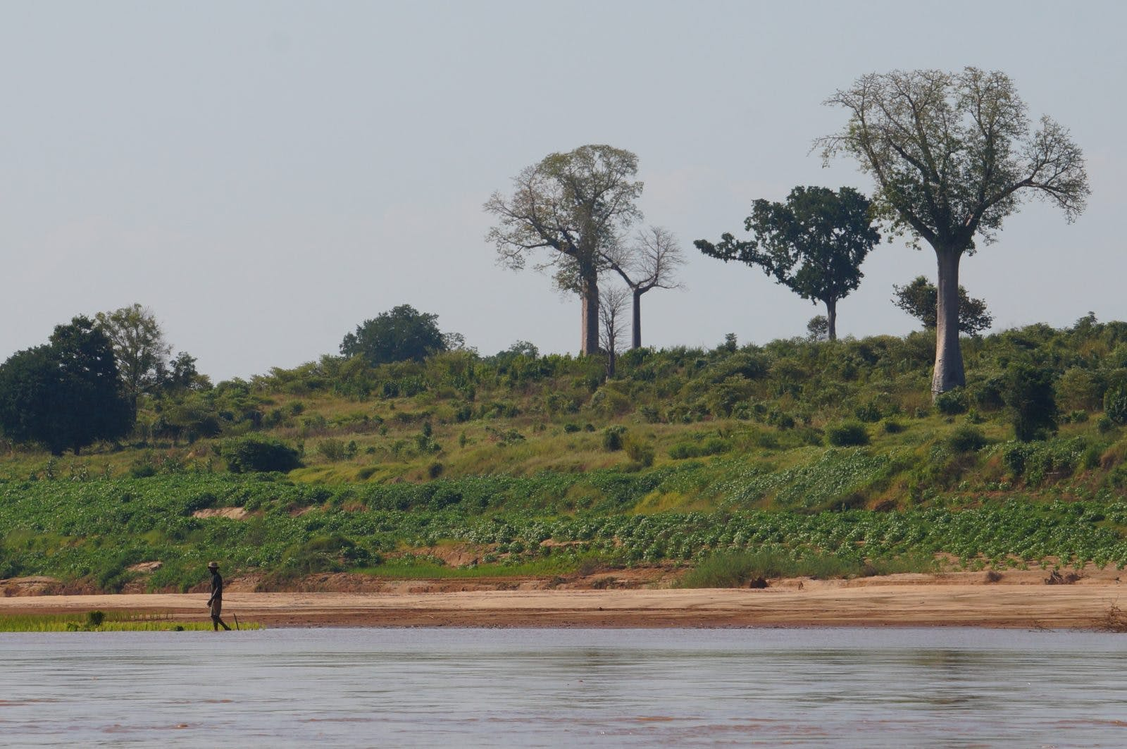 On the third day we saw our first Baobab trees. We also started to encounter more farmers planting on the river banks meaning we had to work harder to find campsites that wouldn't interfere with peoples daily life.