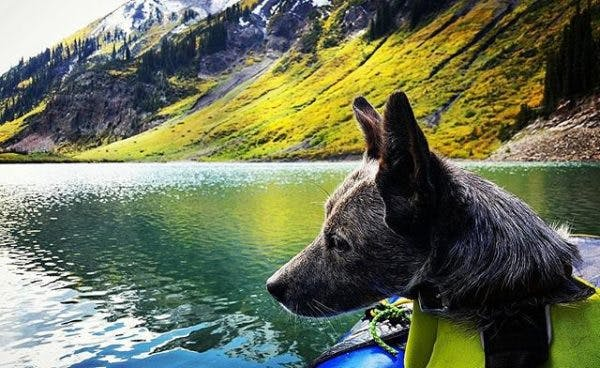 """Runner up: """"A good dog, an inflatable boat, and a free afternoon can't cure everything...just the important things,"""" by @dirty_kate."""