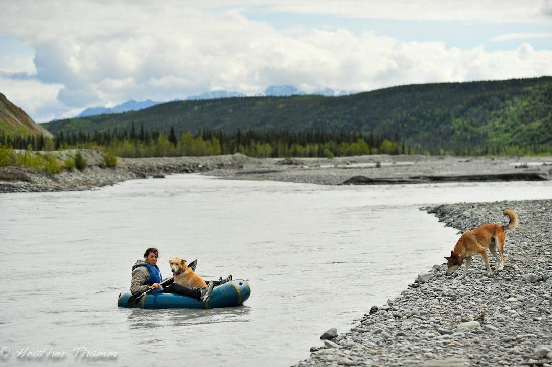 """Heather Thamm: """"Matanuska State Ferry. Betsy Young ferrying her pups home after a day at the office. Matanuska River, Alaska."""""""