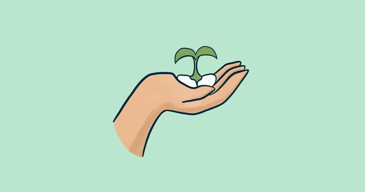Cypress seeds