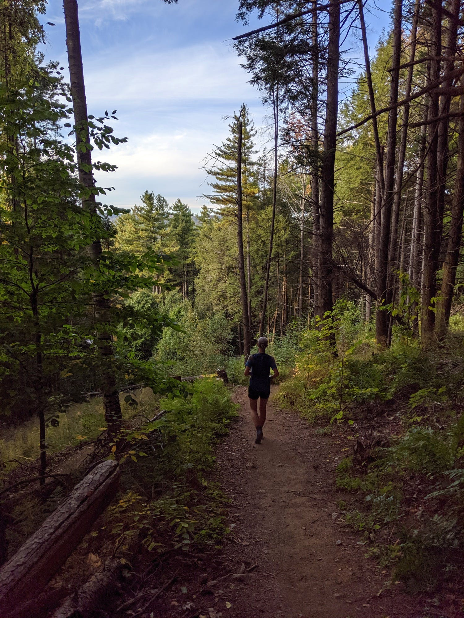 Out of the woods to the finish. Photo: Doug Lipinski