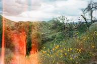 Superbloom Hike
