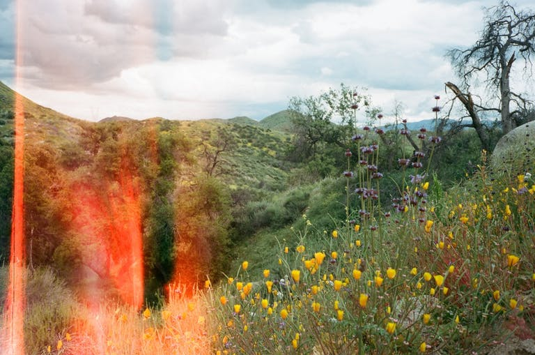 Featured Image: Superbloom Hike