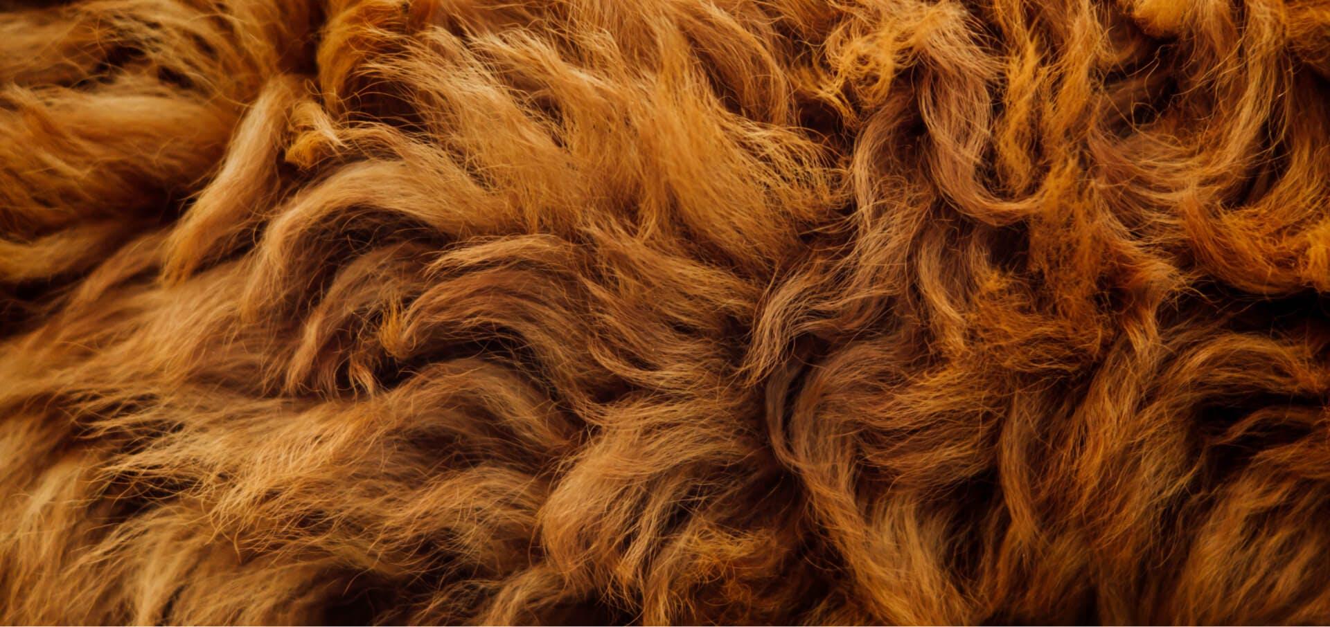 Dog hair focusing