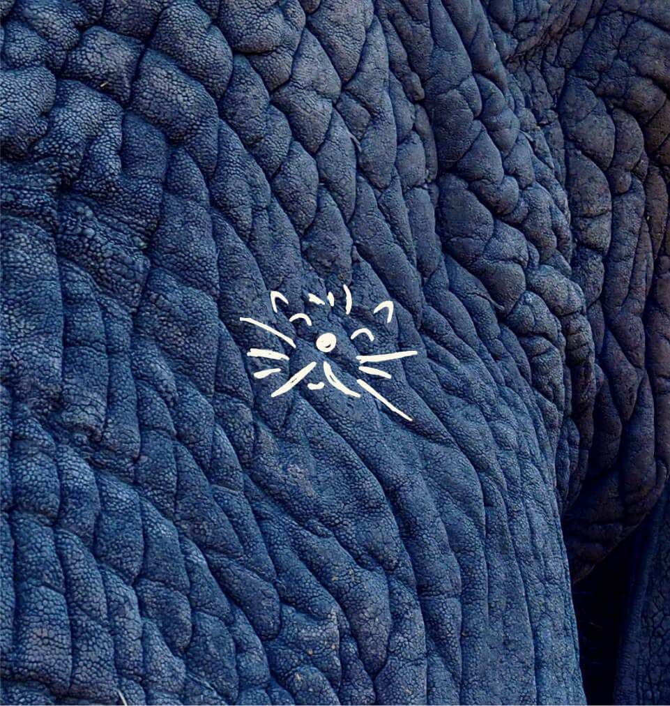 Cat illustration on elephant skin