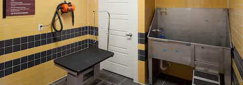 Interior view of paw wash at AMLI at Escena apartments with grooming table and drier and wash sink and yellow tile walls