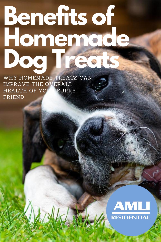 The Benefits Of Homemade Dog Treats