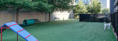 An exterior view of the pet park at AMLI 900 which contains artificial turf and multiple objects for pets to jump and play on