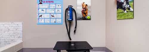 Interior of AMLI Littleton Village apartment pet spa with grooming table and dryer, grooming tips and custom dog wall art