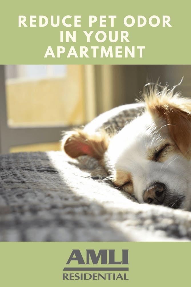 Reduce Pet Odor in Your Apartment