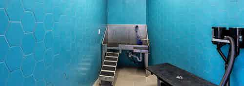 Paw wash at AMLI on Aldrich with bright blue walls and a deep stainless steel pet sink with drying table and light flooring