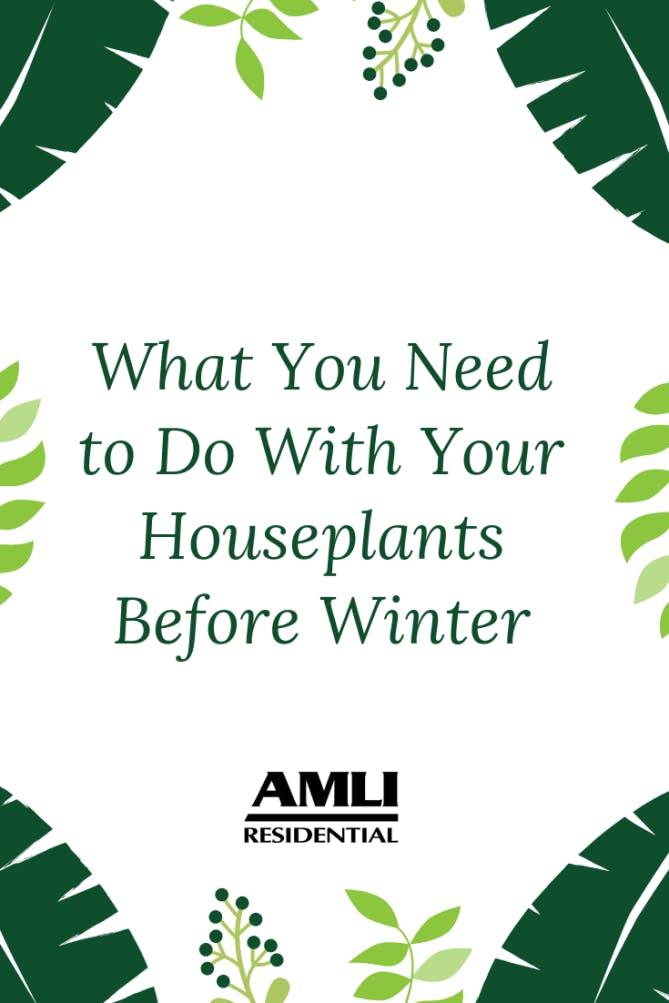 What You Need to do with Your Houseplants Before Winter