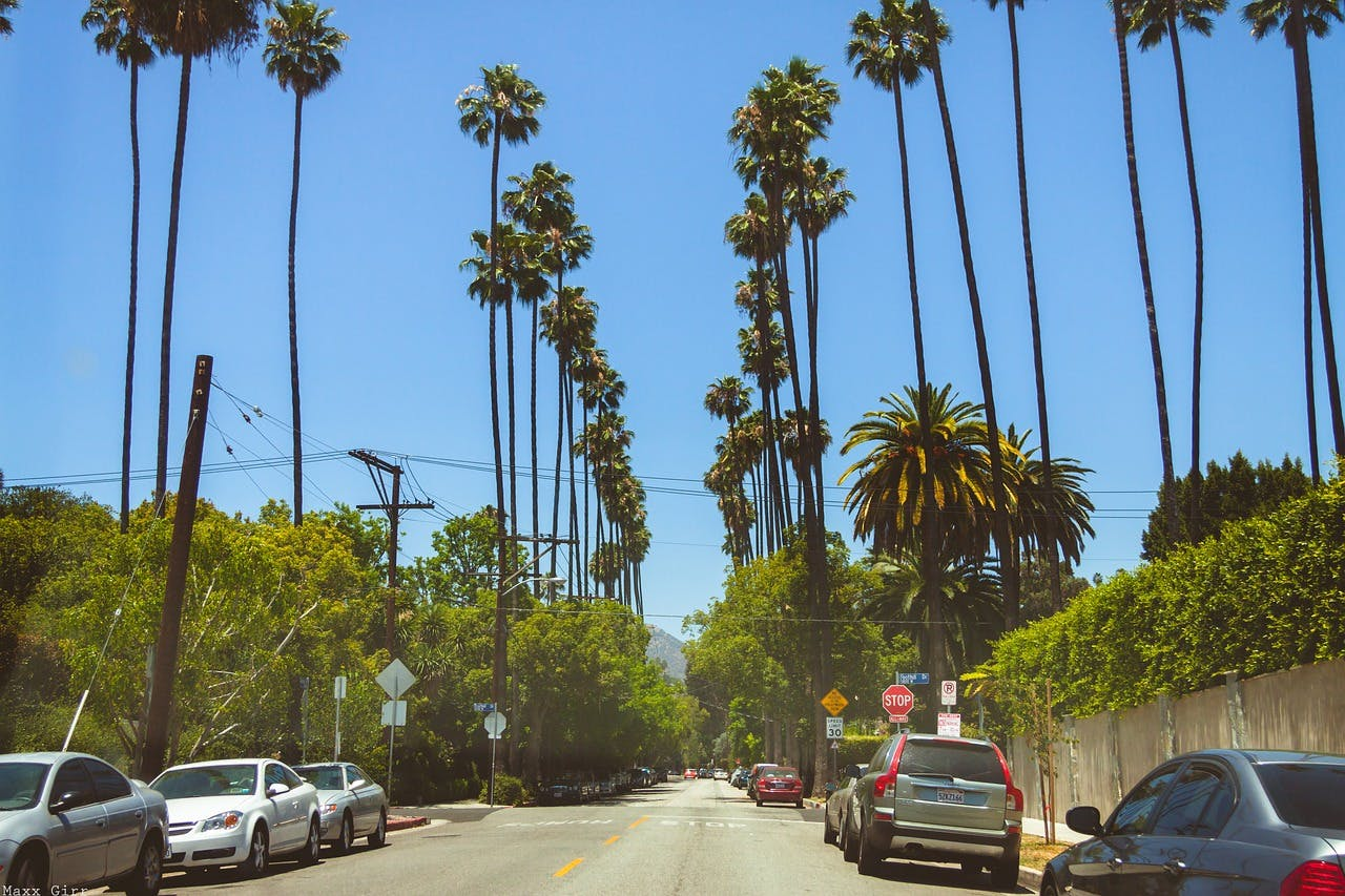 Tall skinny palm trees on either side of a small, sunny road in Beverly Hills.