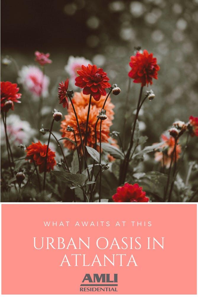 urban oasis in Atlanta.