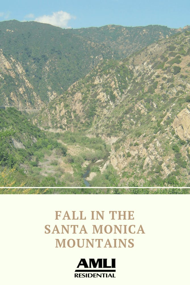 fall in the Santa Monica Mountains