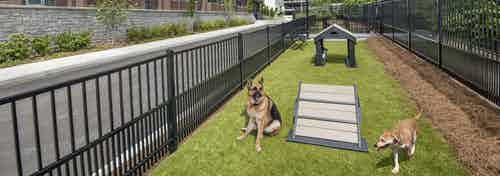 AMLI Decatur pet park with black fence surrounding open grassy space with two dogs and a few obstacle toys and a bench