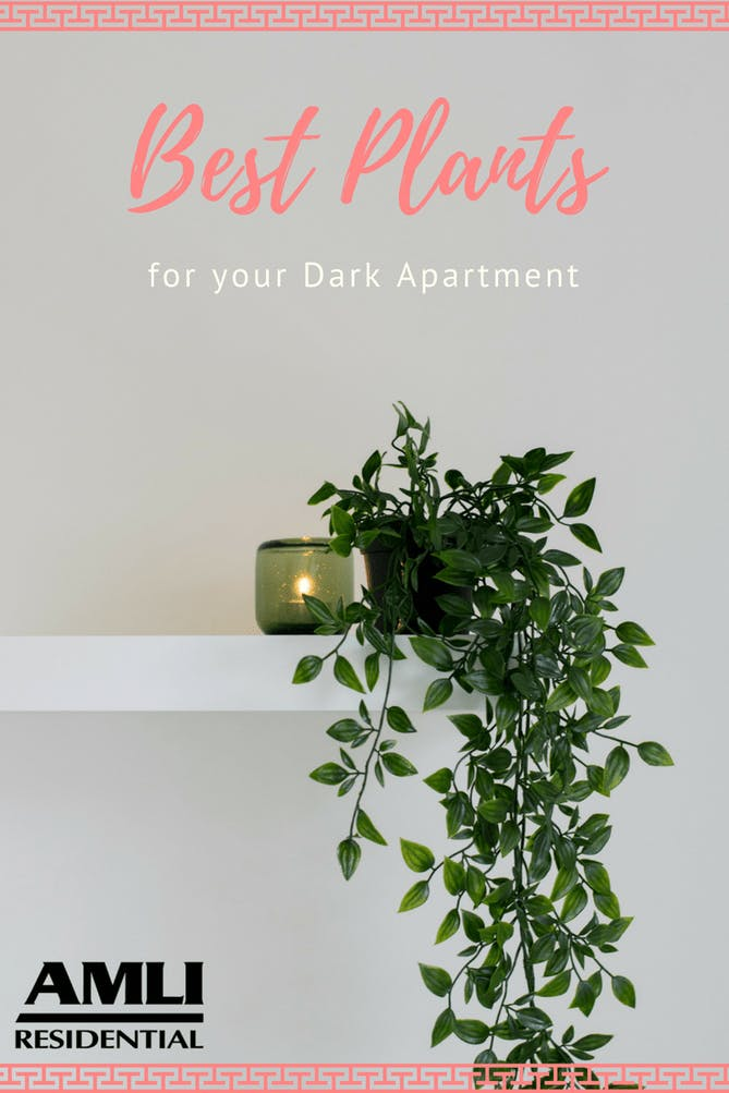 best plants for your dark apartment