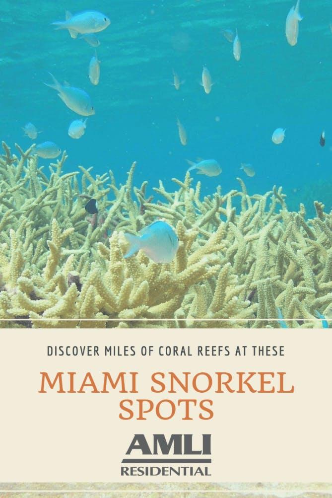 Miami Snorkel Spots