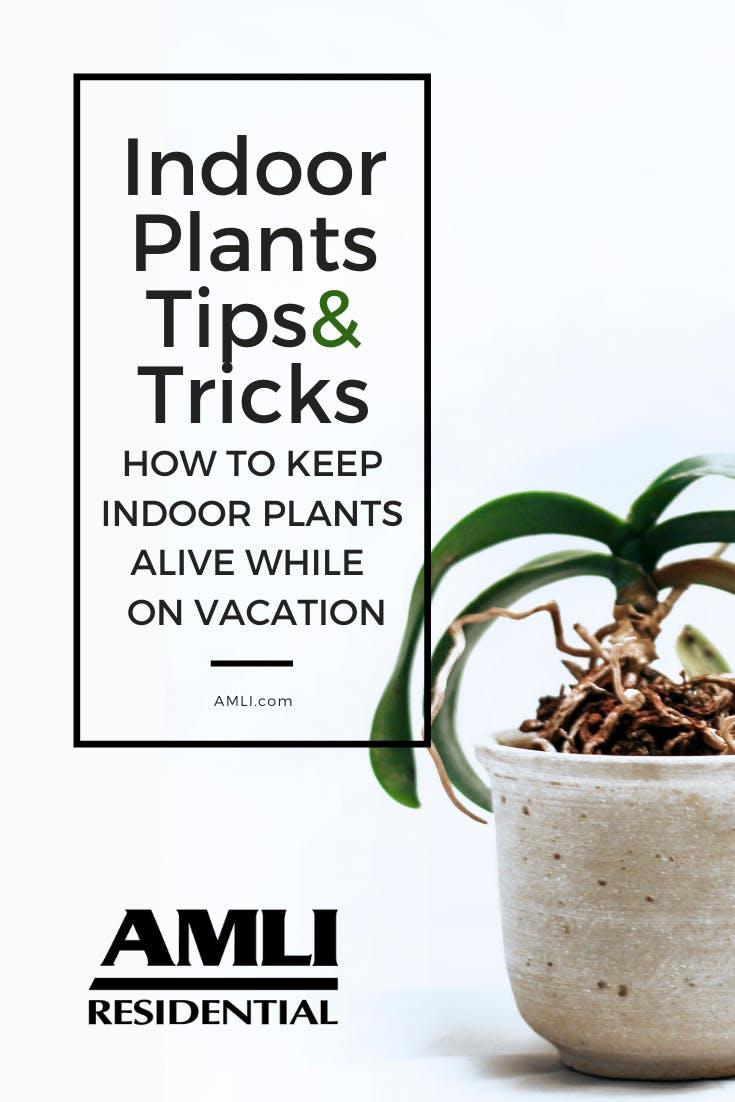How to keep indoor plants alive Pinterest graphic