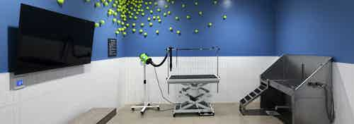 Pet spa at AMLI Park Broadway with unique tennis ball wall design on blue wall and grooming and washing stations