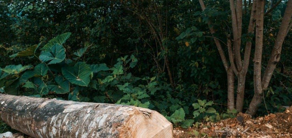 Paysage de Cuetzalan au Mexique où 8 défenseurs de l'environnementont été poursuivis pour leurs activités.