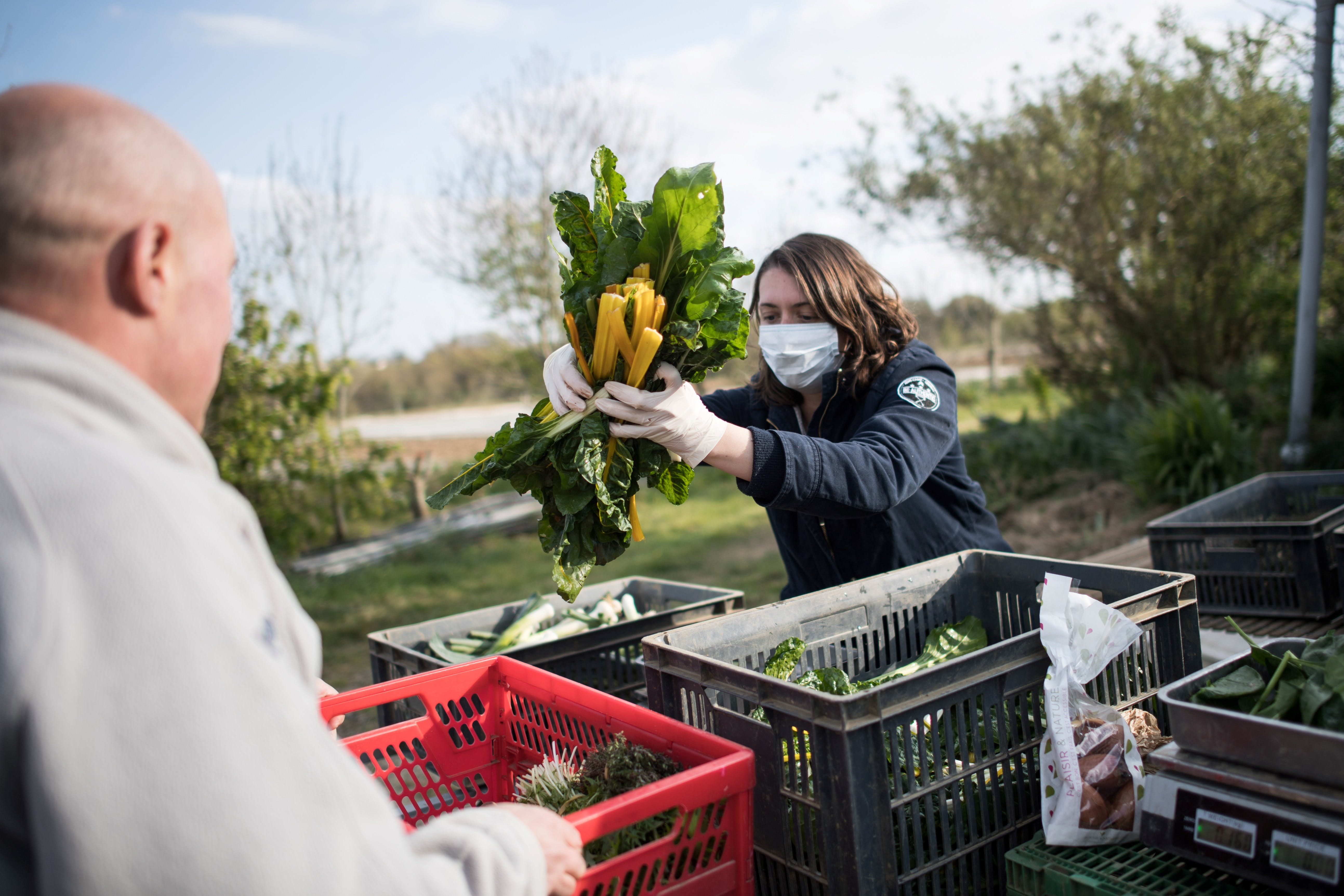 A woman fills the basket of a AMAP (Association pour le maintien d'une agriculture paysanne) member with vegetables during the weekly distribution, in Campbon, western France, on April 2, 2020, on the seventeenth day of a strict lockdown in France to stop the spread of COVID-19 (novel coronavirus). (Photo by Loic VENANCE / AFP) (Photo by LOIC VENANCE/AFP via Getty Images)