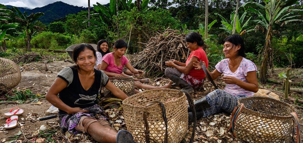 Women harvesting yuca in La Curva (Morgana Vargas Llosa, 2019)