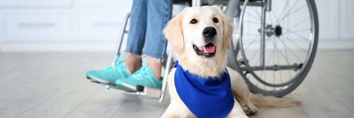 Service Dog Costs 101 How To Budget For A Canine Companion