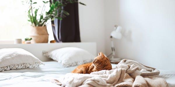 un gato descansando en la cama