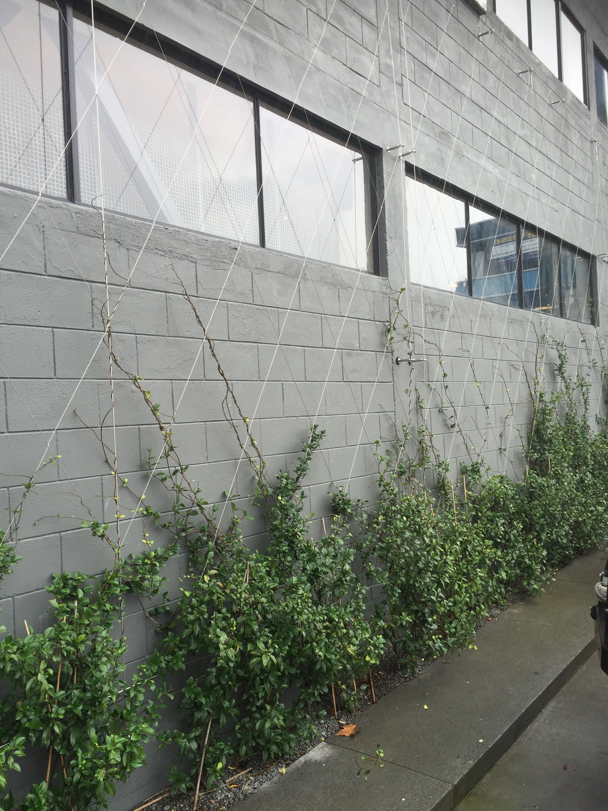 Anzor Meshnet Foliage Wall Example