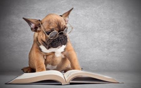 HSC English: Nailing that comprehension stuff