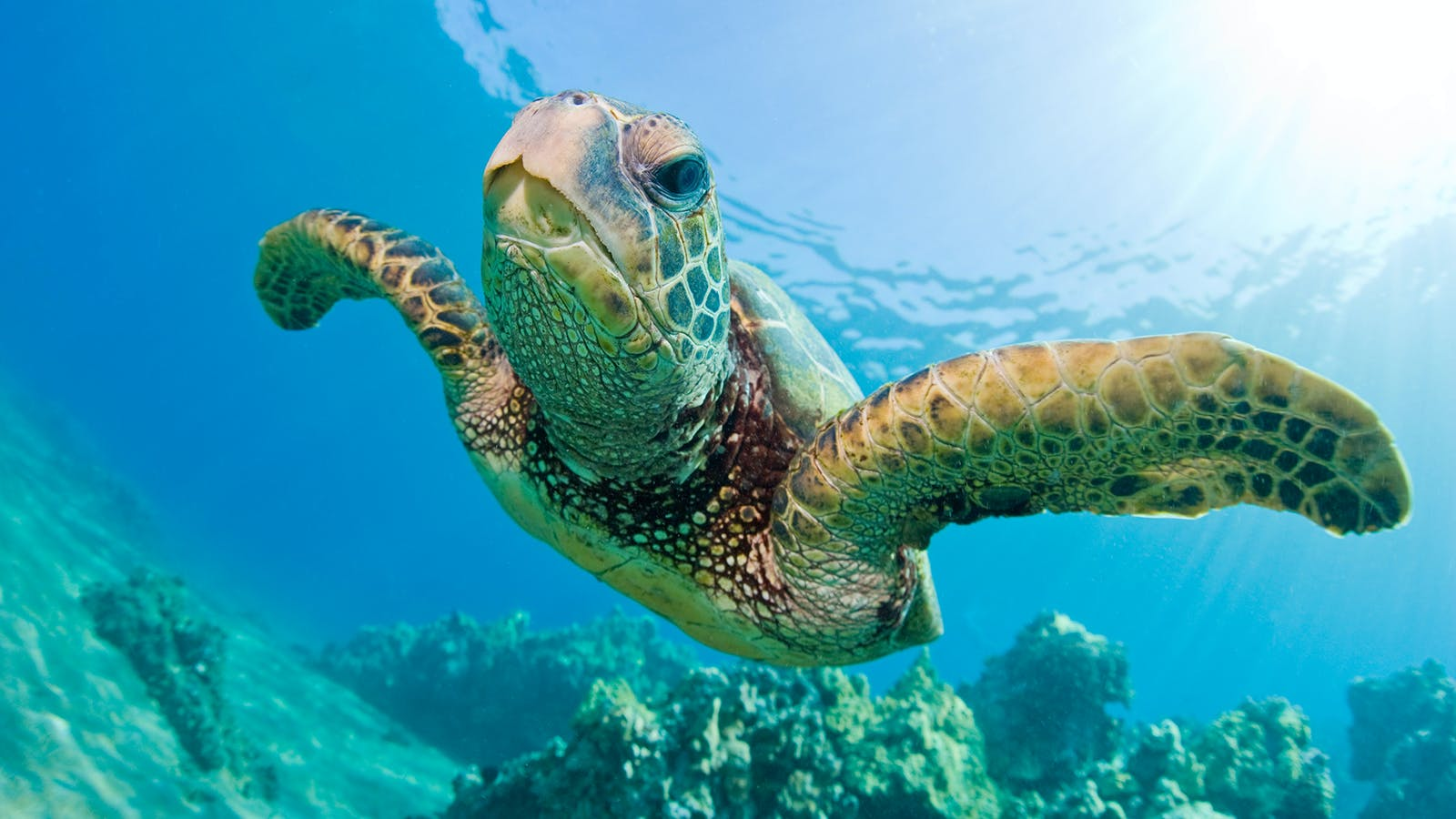 Climate change is turning turtles into girls