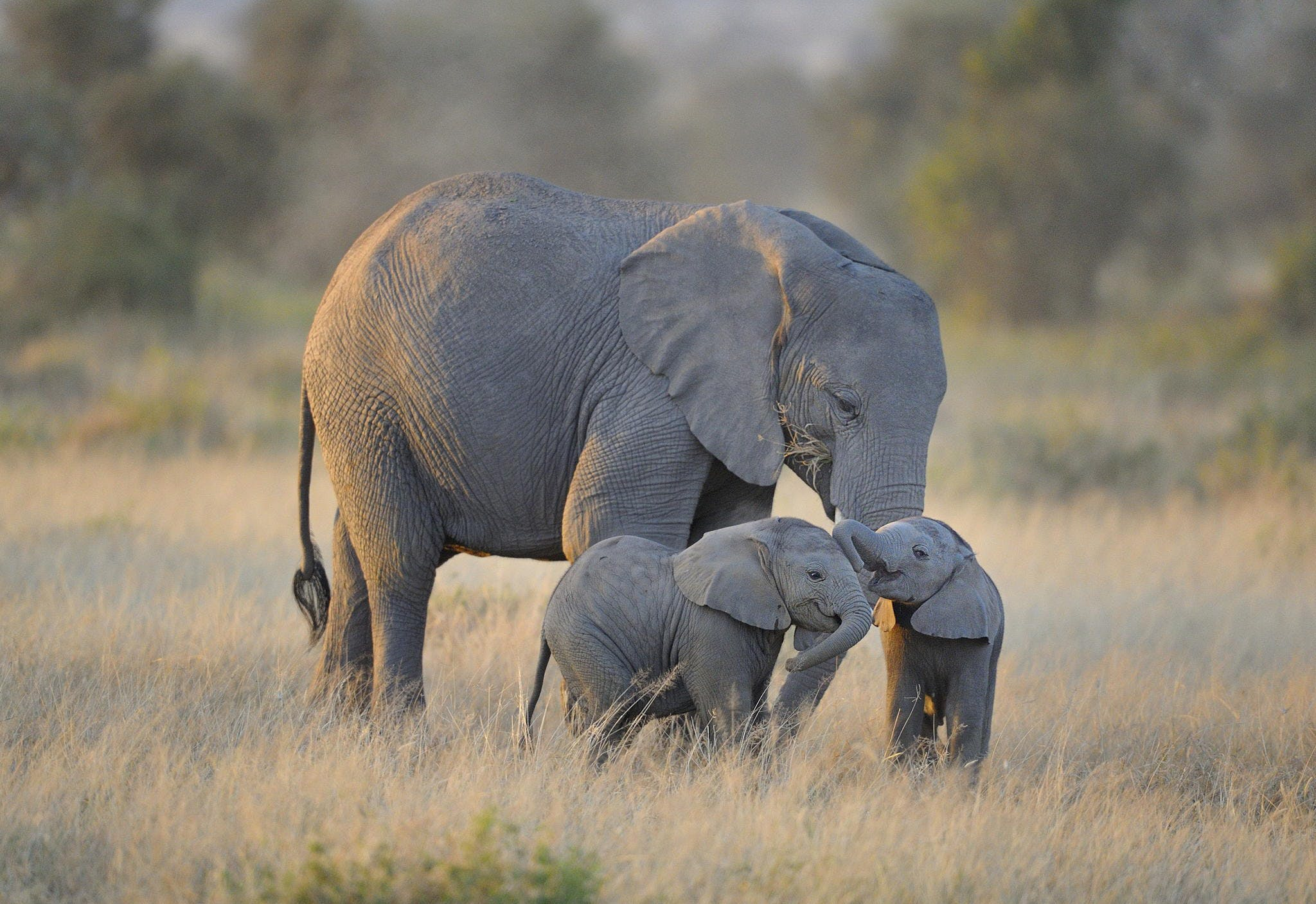 5 endangered species that have had some good news