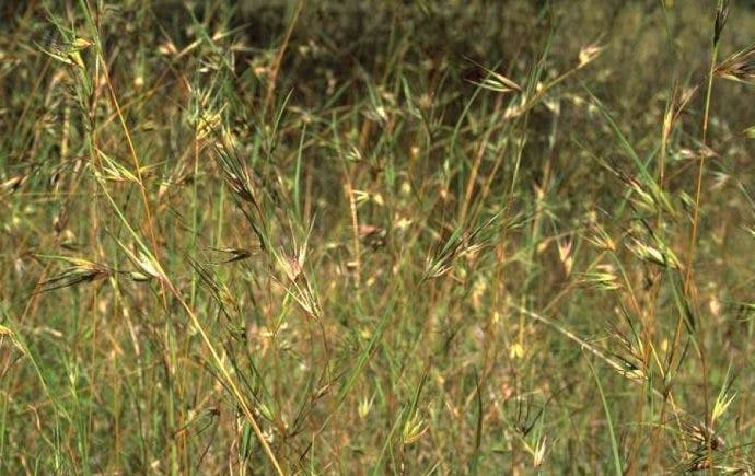 SCIENCE: Grasses For Grains is greening our kitchens