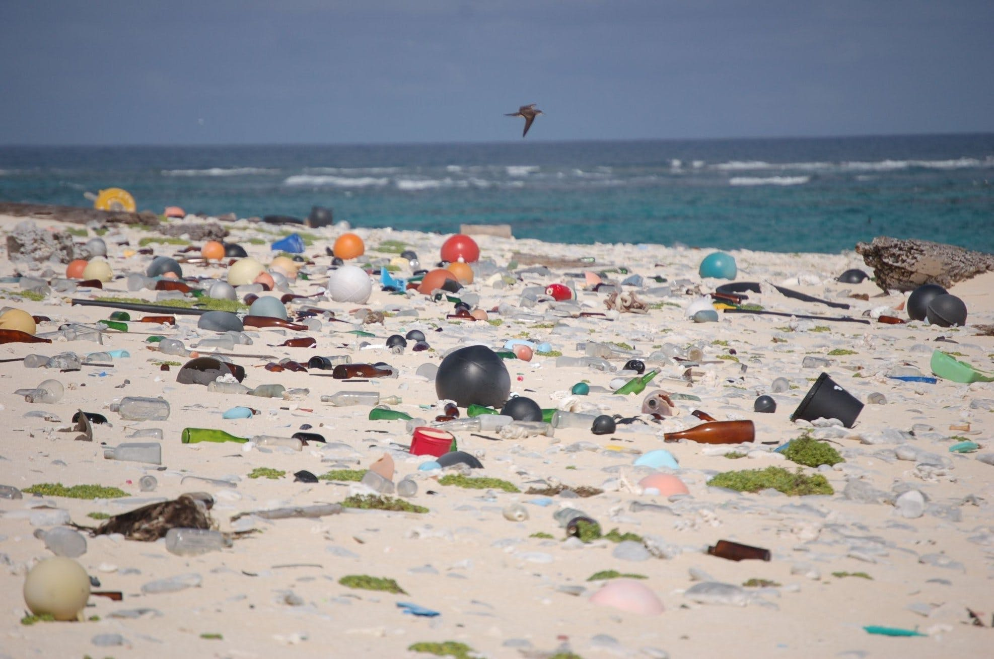 Science: reducing our reliance on plastic