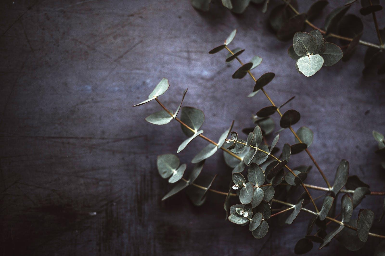naturopathe – soin naturels – soigner naturellement – aromathérapie - naturopathie.