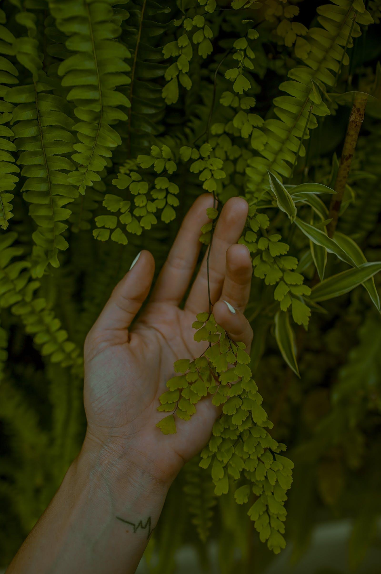 Naturopathie – naturopathe – soigner de façon naturelle – soins naturels – soin par les plantes et les huiles essentielles - aromathérapie.