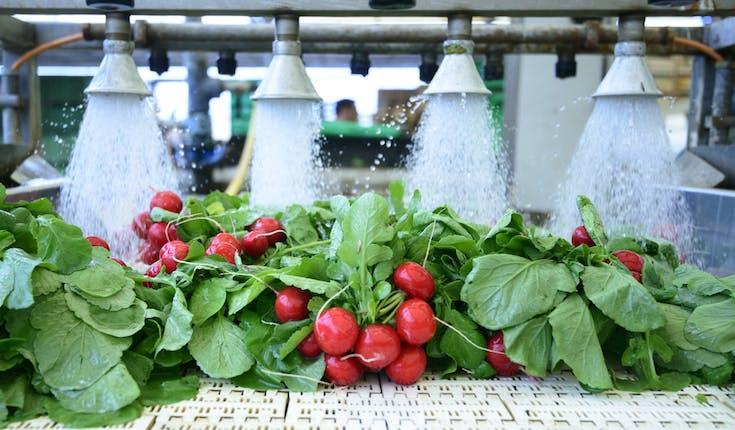 Trägt Technologie zur Verbesserung der Lebensmittelqualität bei?