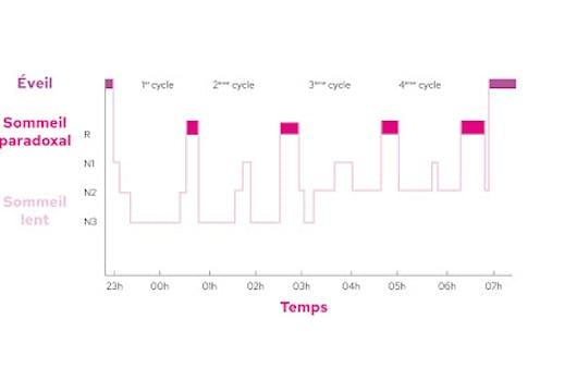 Explication sur le cycle du sommeil