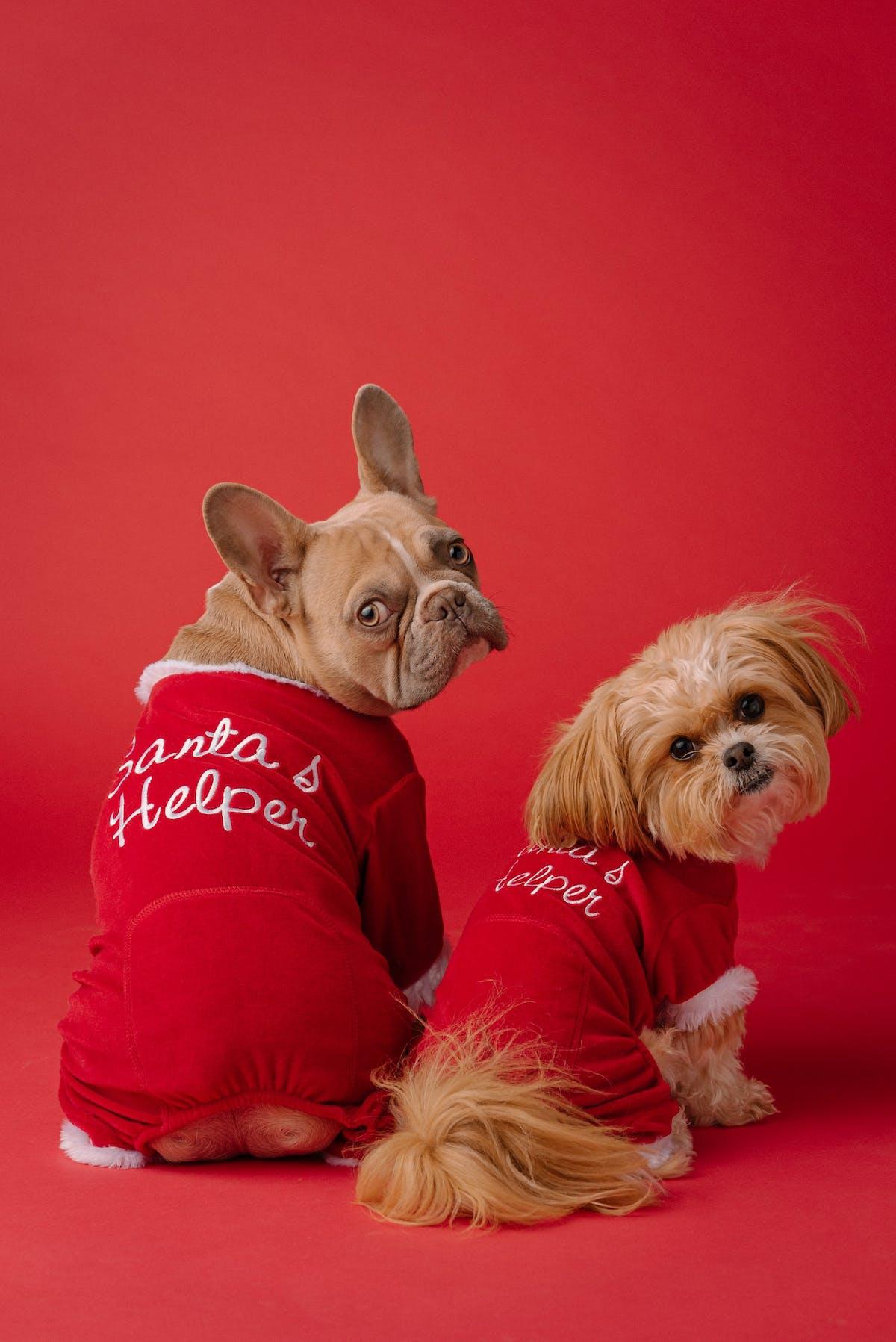 dogs wearing santas helper jackets