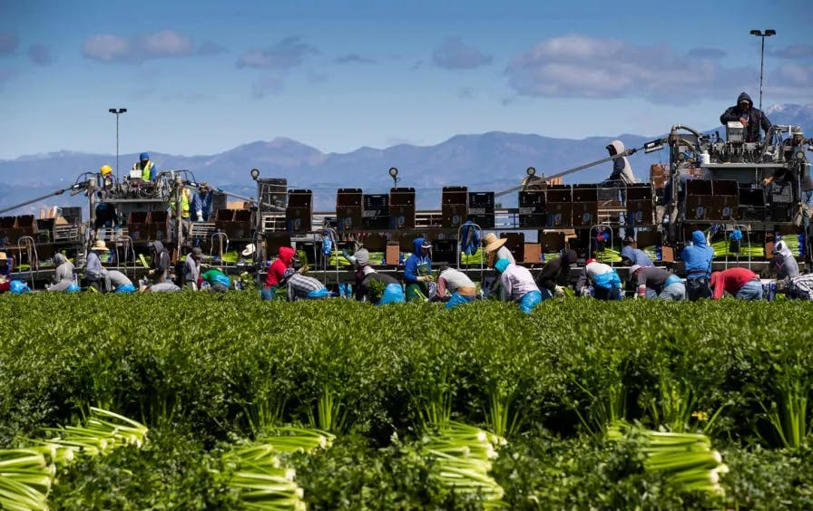 Agricultural workers in Oxnard, Calif., in March 2020.