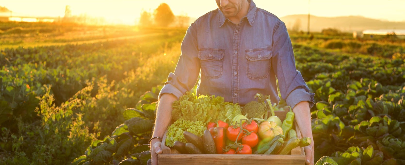 Farmer preparing crop for distribution