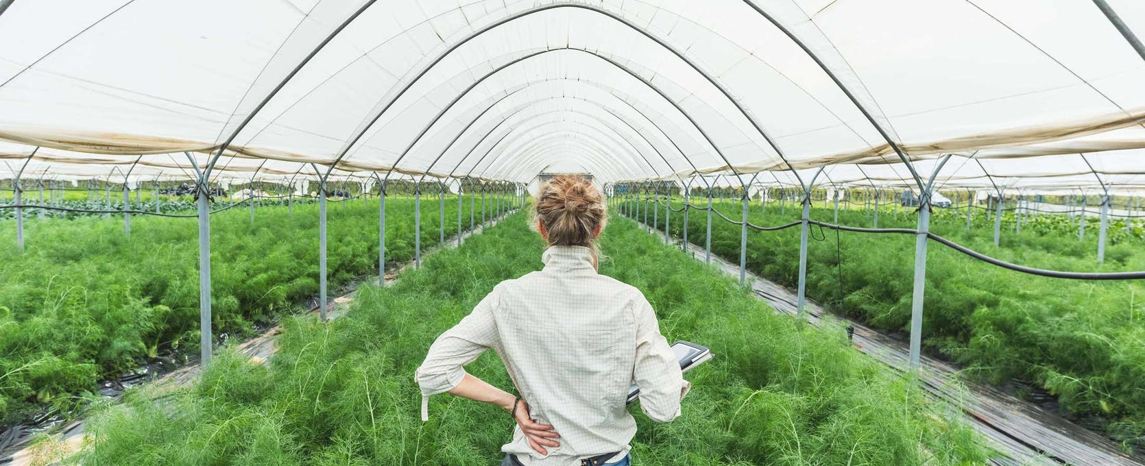 Owner oversees her portion of a cooperative crop