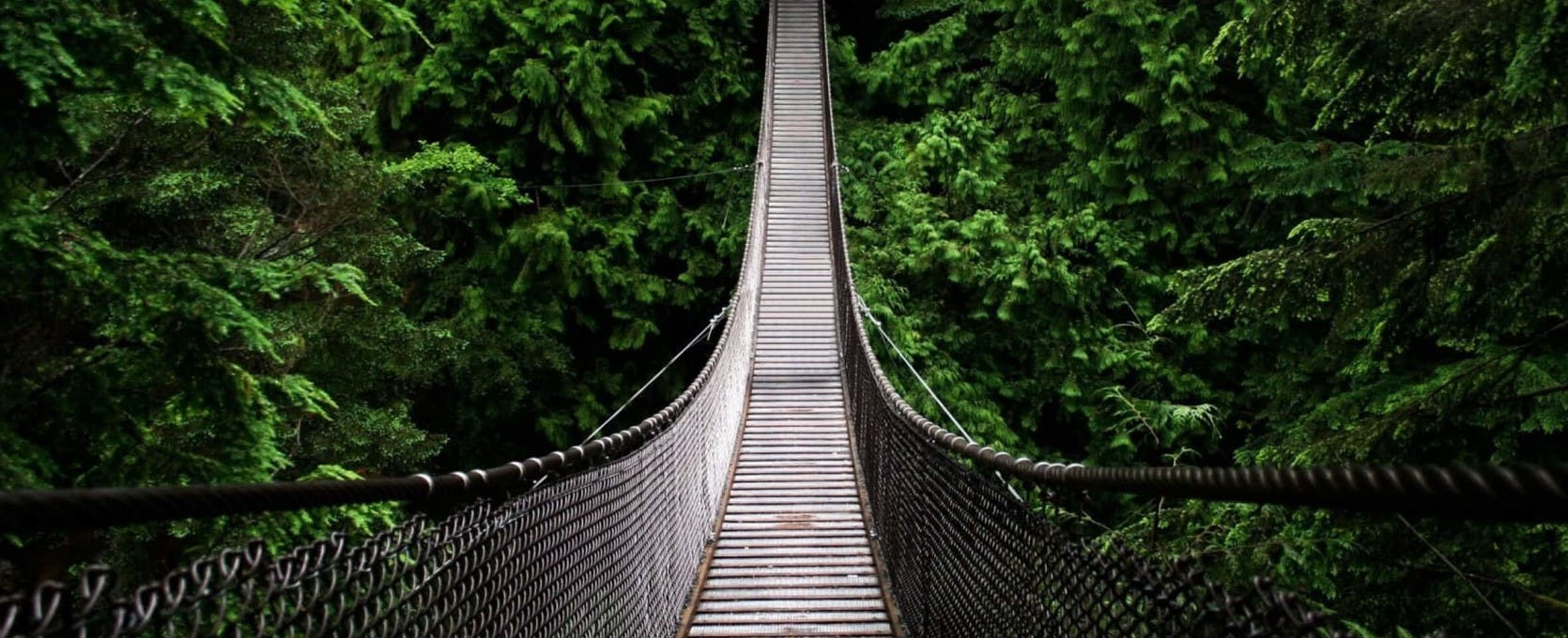 Suspended bridge over the canopy