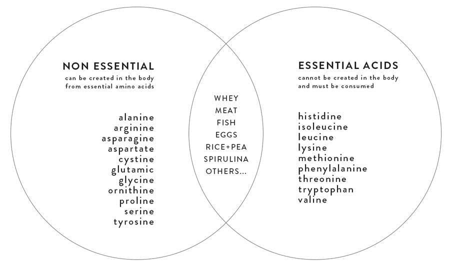 essential-non-essential-amino-acids