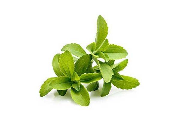 organic stevia
