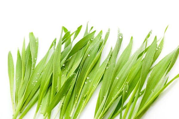 organic barley grass